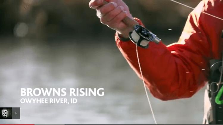 brown trout owyhee fly fishing