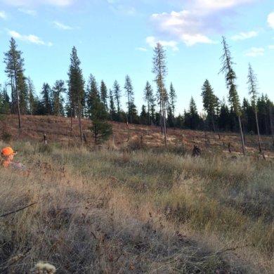 hunting with binoculars