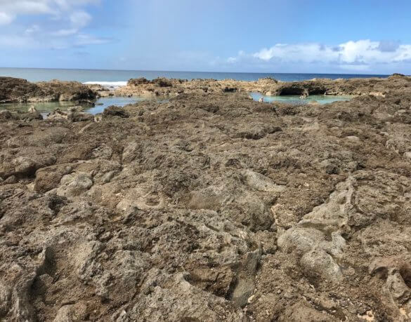 This photo shows a tidal pool area and lava rock at Sharks Cove in Hawaii.