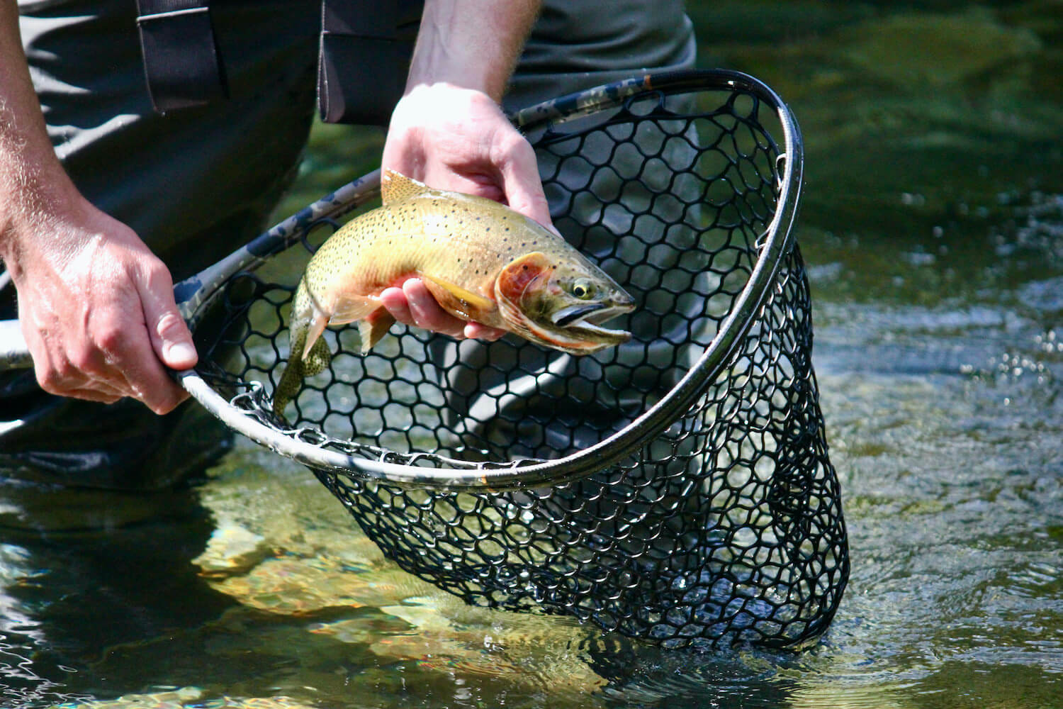 This best fly fishing net photo shows a fly fishing net being tested by the author.