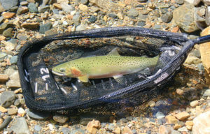 This photo shows a Measure Net Rubber fishing net with a cutthroat trout.